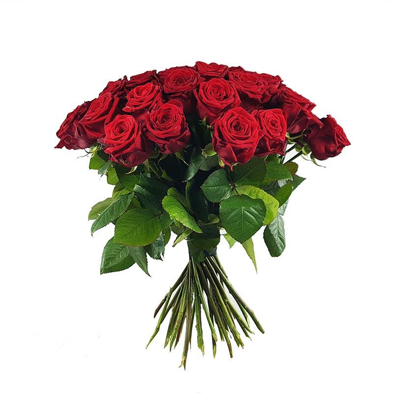 Rote Rosen Online